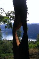 Italy tree sculpture 2012